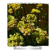 Sulfur Flower Shower Curtain