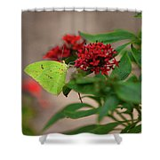 Sulphur Butterfly On Red Flower Shower Curtain