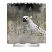 Sulphur Crested Cockatoo Shower Curtain