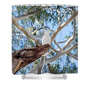 Sulphur-crested Cockatoo Shower Curtain
