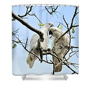 Sulphur Crested Cockatoos Shower Curtain