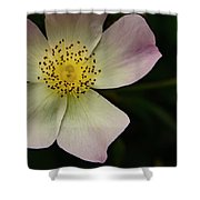 Sultry Hellebore Shower Curtain