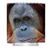 Sumatra Orangutan Portrait Shower Curtain