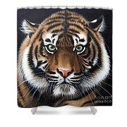 Sumatran 2 Shower Curtain by Sandi Baker