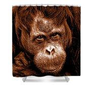 Sumatran Orangutan Female Shower Curtain