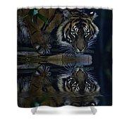 Sumatran Tiger Reflection Shower Curtain