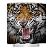 Sumatran Tiger Snarl Shower Curtain