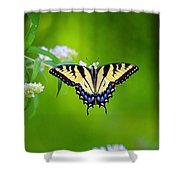 Summer 8 Shower Curtain