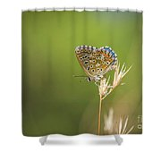 Summer, Adonis Blue Butterfly, Polyommatus Bellargus Basking In Sun. Andalusia, Spain. Shower Curtain