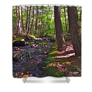 Summer B2015 73 Shower Curtain