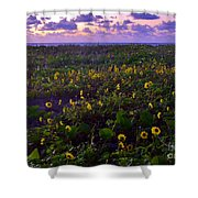 Summer Beach Daisies 1 Shower Curtain