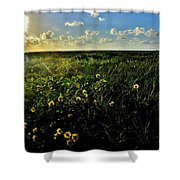 Summer Beach Daisy 2 Shower Curtain