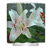White Tiger Lilies  Shower Curtain