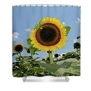 Summer Begin Shower Curtain