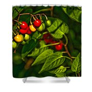 Summer Berries Shower Curtain