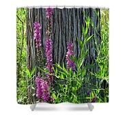 Summer Bloom Shower Curtain