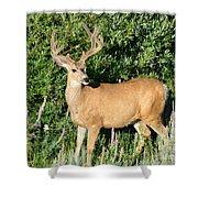 Summer Buck Shower Curtain