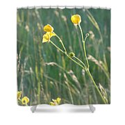 Summer Buttercups Shower Curtain