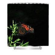 Summer Capture Shower Curtain
