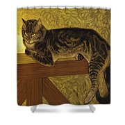 Summer Cat On A Balustrade Shower Curtain