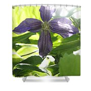 Summer Clematis In Light Shade Shower Curtain