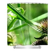 Summer Composition Shower Curtain