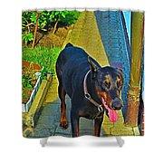 Summer Dog Day Shower Curtain