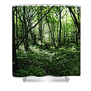 Summer Forest On A Sunny Day Shower Curtain