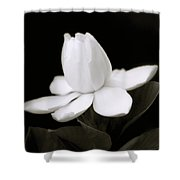 Summer Fragrance Shower Curtain