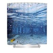 Summer Fun In Maldives Shower Curtain