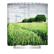 Summer Grains Shower Curtain
