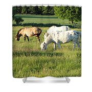 Summer Grazing Shower Curtain