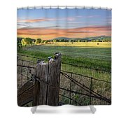 Summer Hay Bales  Shower Curtain