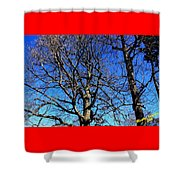 Summer In United States Shower Curtain