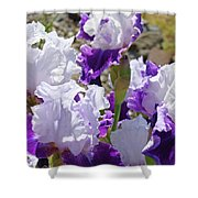 Summer Iris Garden Art Print White Purple Irises Flowers Baslee Troutman Shower Curtain