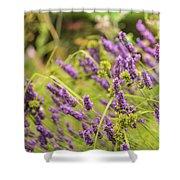 Summer Lavender In Lush Green Fields Shower Curtain