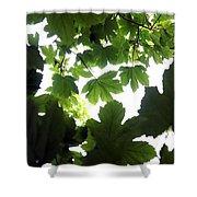 Summer Xxii Shower Curtain