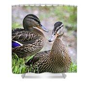 Summer Mallard Couple Shower Curtain