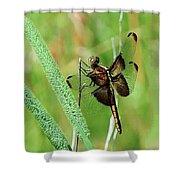 Summer Dragonfly Shower Curtain