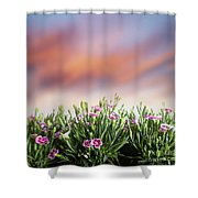 Summer Meadow Flowers In Grass At Sunset. Shower Curtain