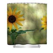 Summer Of Sunflowers  Shower Curtain