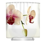 Summer Orchids Shower Curtain