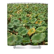 Summer Palace Lotus Pond Shower Curtain