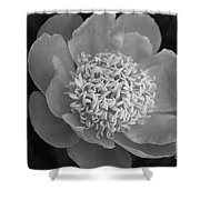 Summer Peony Shower Curtain