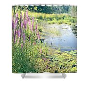 Summer Pond In The Berkshires Shower Curtain