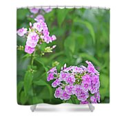 Summer Purple Flower Shower Curtain