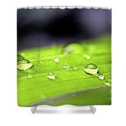 Summer Rain 2 Shower Curtain