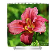 Summer Red Lily Shower Curtain