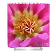 Summer Sass Shower Curtain