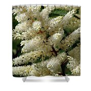 Summer Snow 2 Shower Curtain